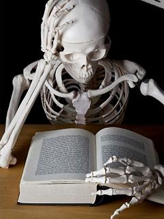 esqueleto-estudio